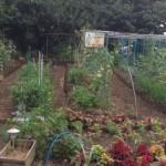 Salad Garden!