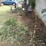 庭作り復活!まずは草取りだ!